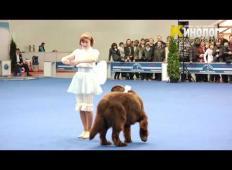 Zaplesala je s svojim ogromnim psom. Navdušila sta žirijo ...