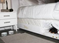 V notranjosti vaše postelje je še ena majhna posteljica za vašo domačo žival...