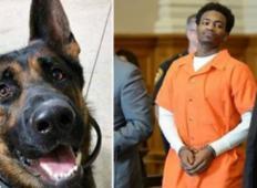Moški, ki je umoril psa je obtožen na zaporno kazen, ki ga bo morda stala življenja!