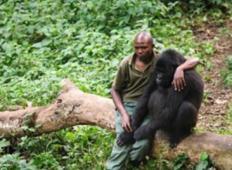 Čuvaj parka potolažil gorilo, ki je pravkar izgubila svojo mater